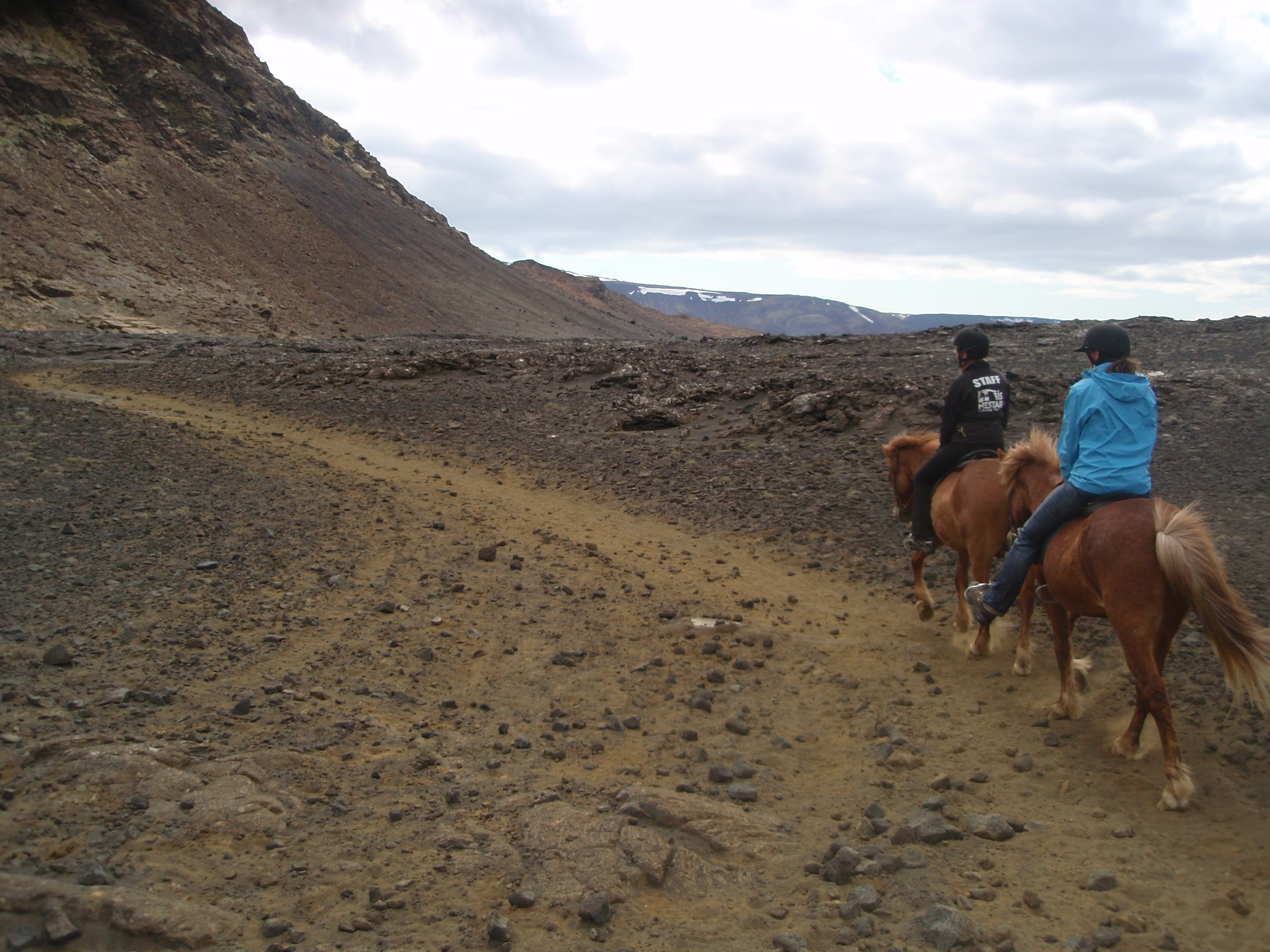 Meeting The Viking Horses In Iceland Pegs On The Line