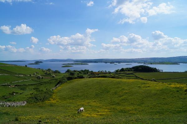 Ireland summer (7)