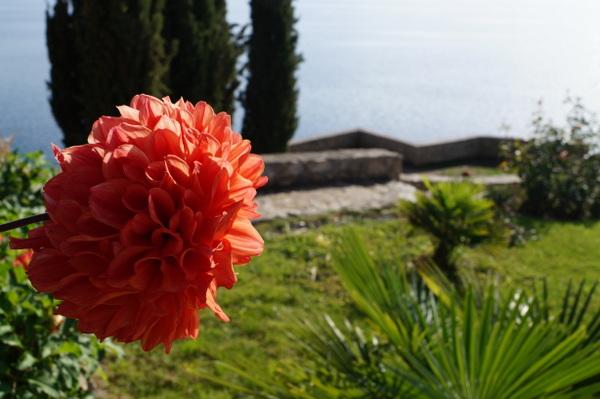 Flower at Sveti Jovan