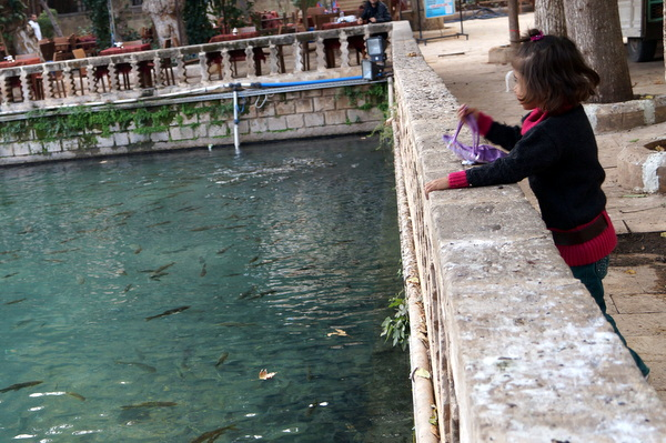 Little girl watching the fish