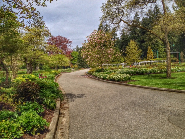 Road into the Rose Garden
