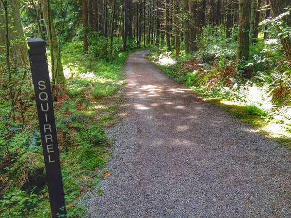 Trails in Stanley Park