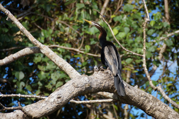 Bird on Daintree River