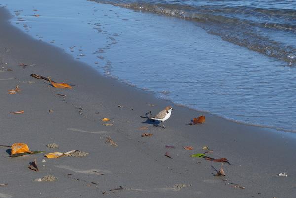 Bird on Myall Beach