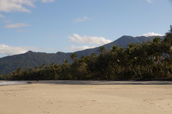Coconut Trees along Myall Beach