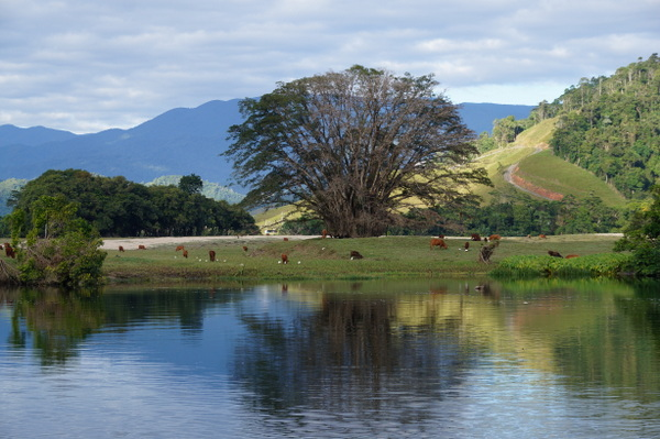 Daintree farmland