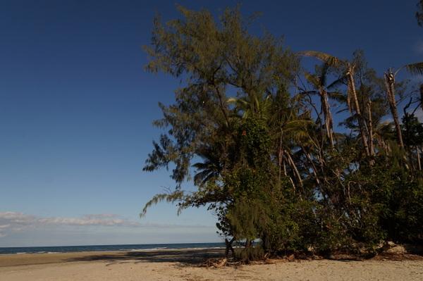 Palms on Myall beach