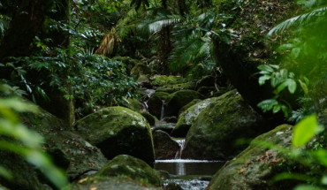 Small river at Mossman Gorge