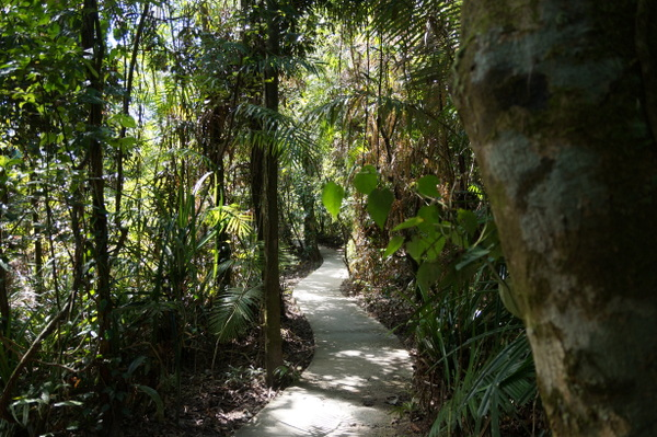 Walk to Cape Tribulation look out
