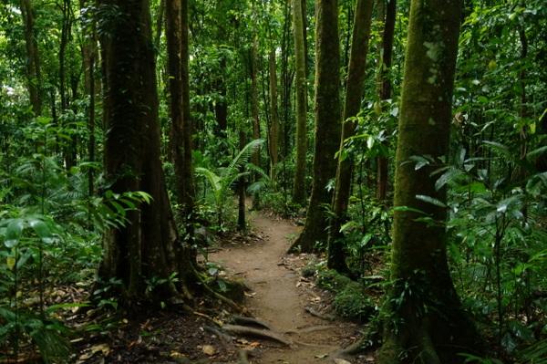 Walking path at Mossman Gorge