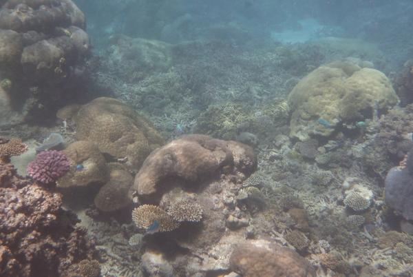 Corol underwater