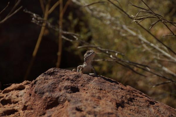Little critter in Boodjamulla