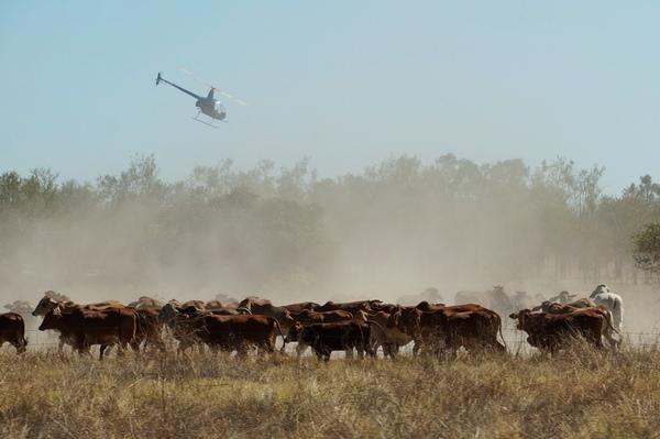 Over the herd