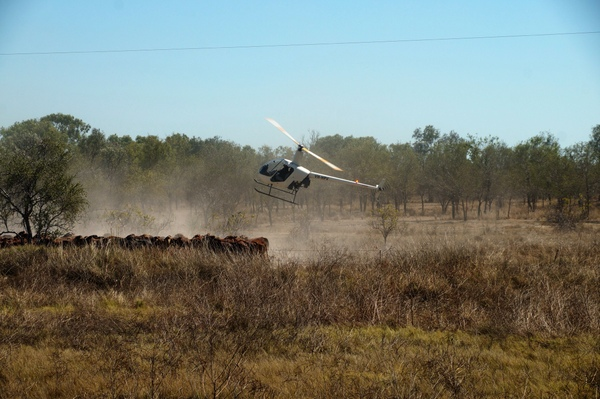 Rounding up the herd