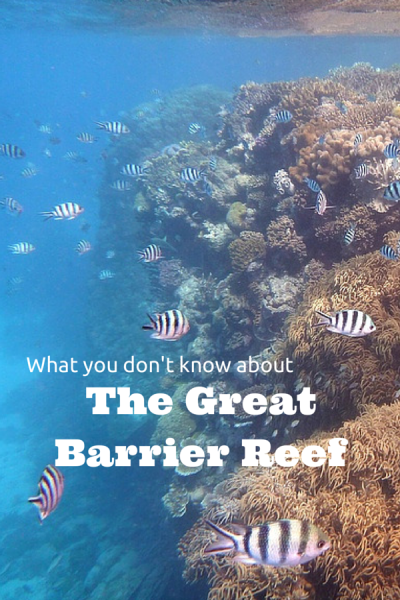 What you don't know about the Great Barrier Reef