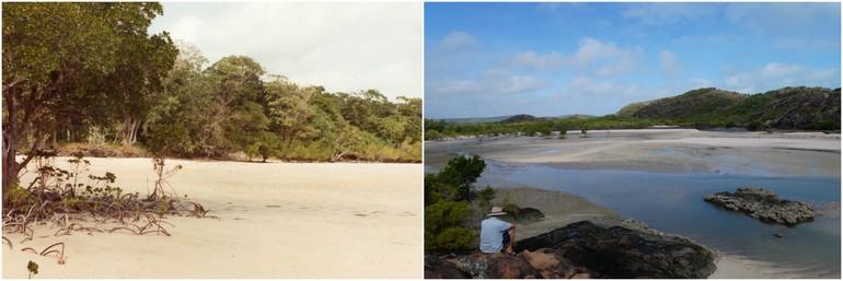Frangipani Beach 1982 2014