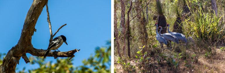 Birds - Rinyirru National Park