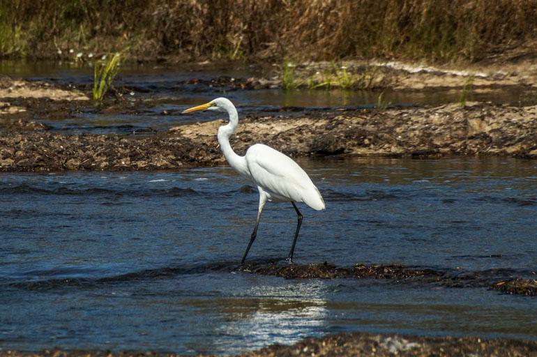 Crane - Rinyirru National Park