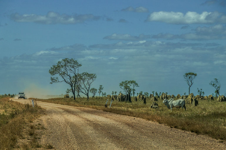 Traffic on Nifold Plain - Rinyirru National Park