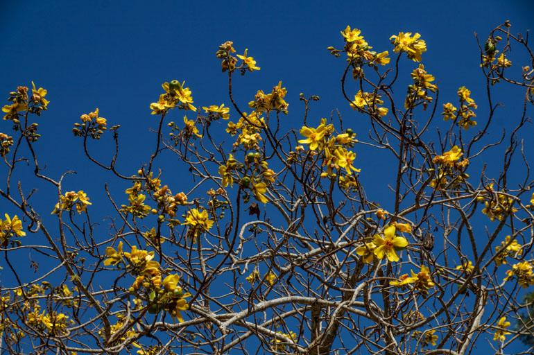 Tree - Rinyirru National Park