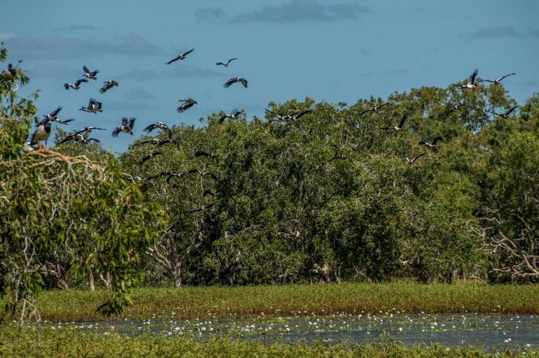 White Lily Lagoon - Rinyirru National Park