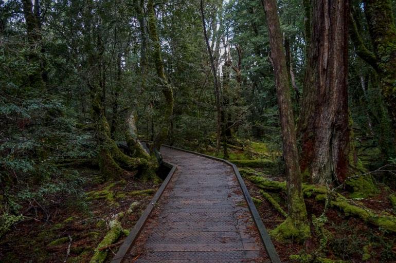 Rainforest Walk, Cradle Mountain