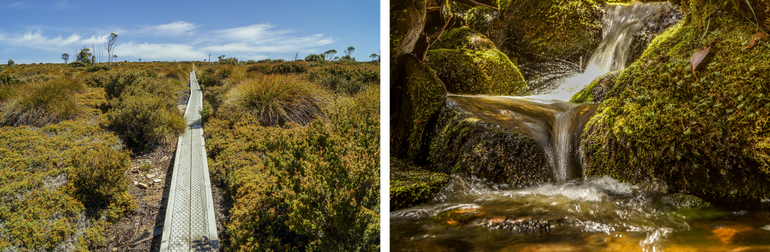 Along the Overland Track