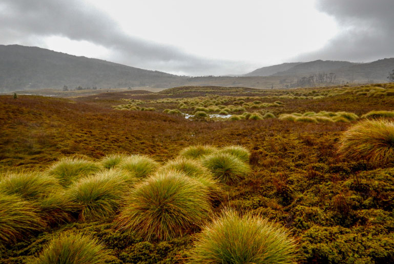 Button Grass plains on the Overland Track