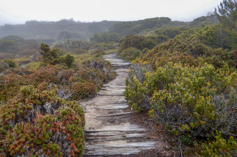 Foggy track - Overland Track