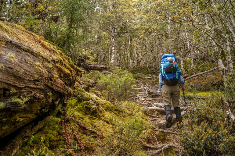 Hiking through rainforest - Overland Track