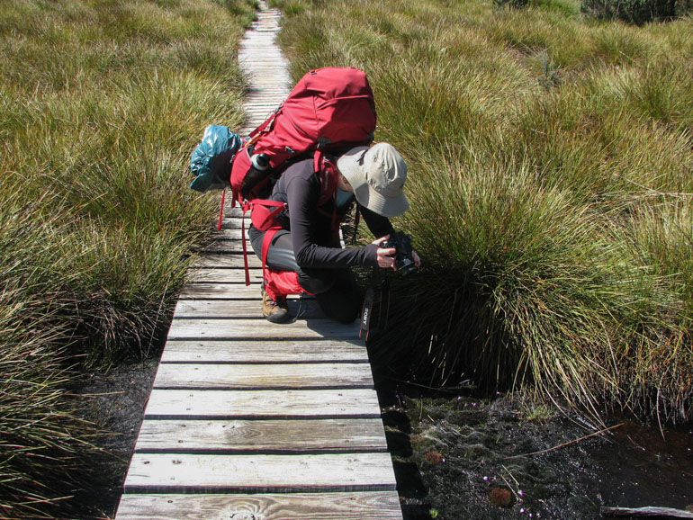 Me, photographing faries aprons on the Overland Track