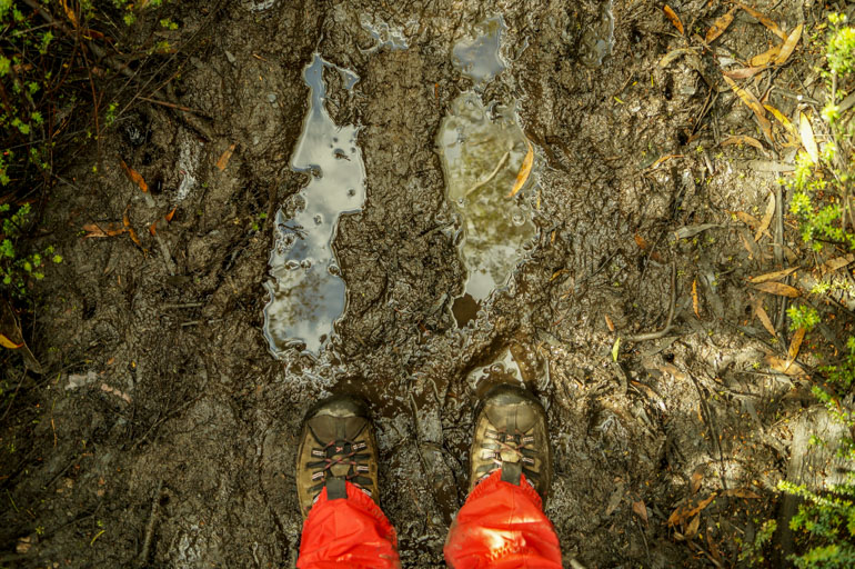 Muddy track, Overland Track