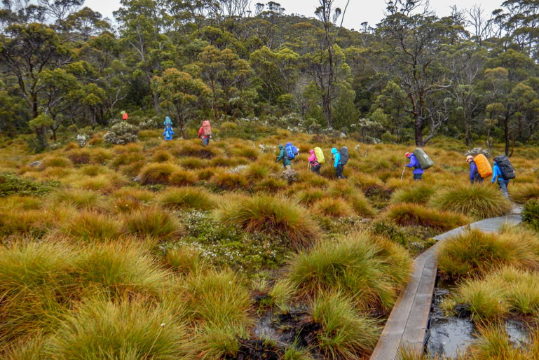 Walking the Overland Track