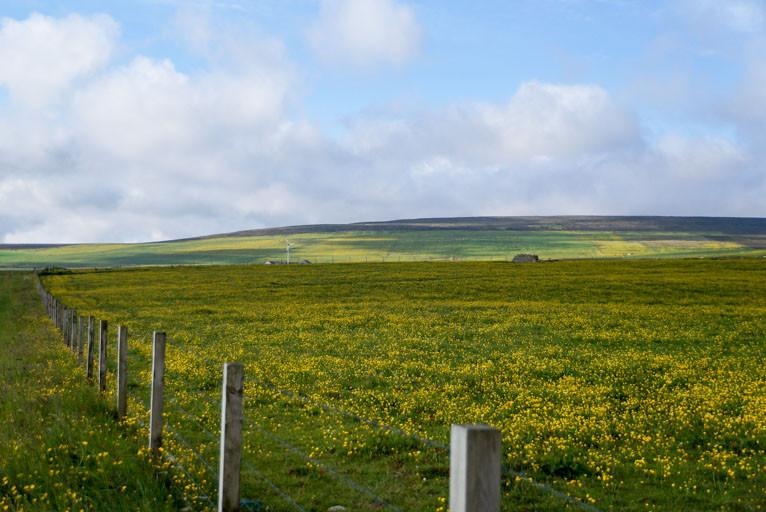 Orkney Islands paddocks